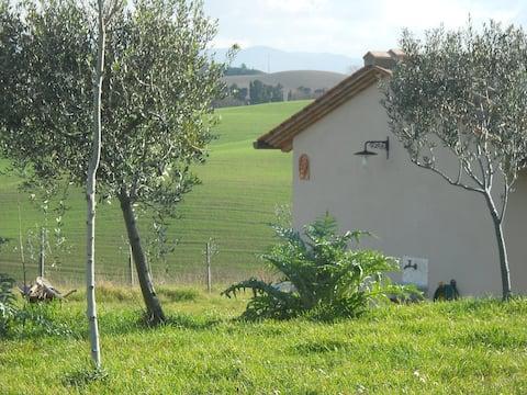 GIORGIA Campagna Toscana Pise
