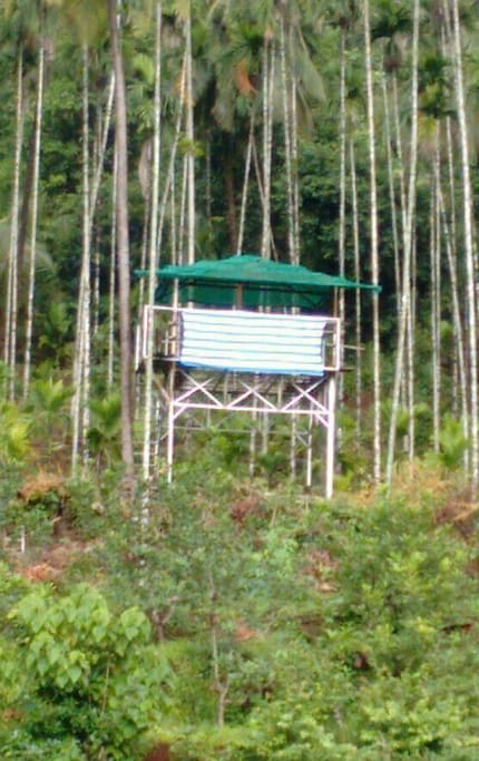 Scaffold (मचाण) for bird watching
