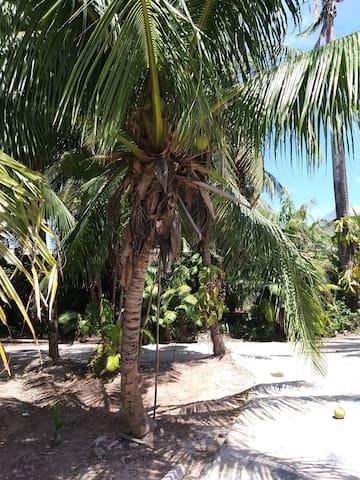 Desfrute da brisa à sombra dos coqueirais