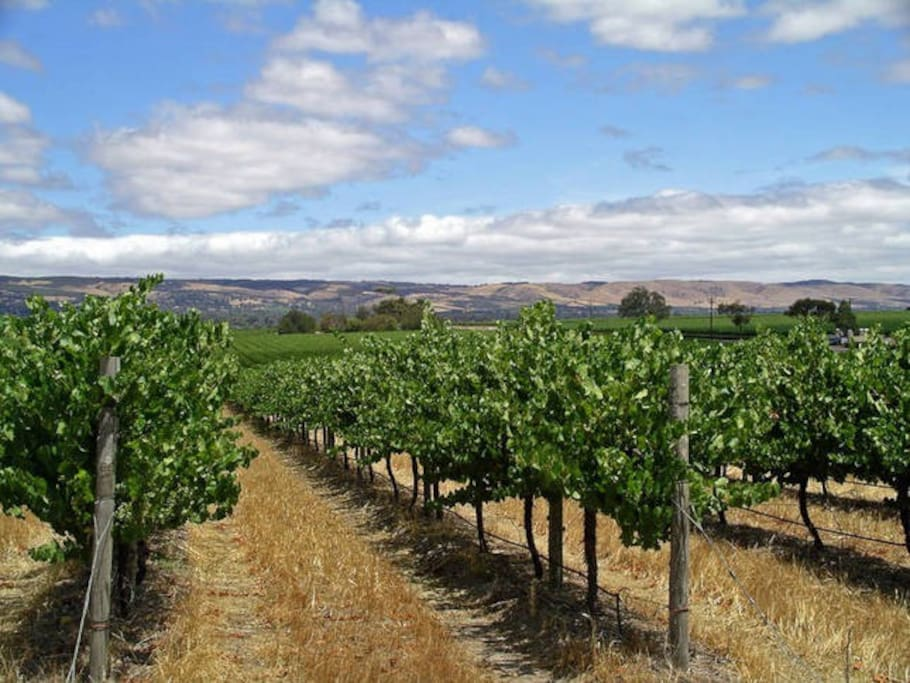 Nearby Mclaren Vale wine growing area