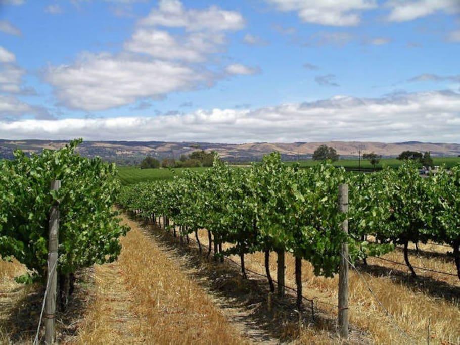 Nearby Mclaren Vale wine growing area