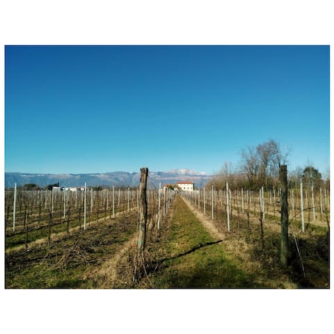 Beautiful place in the middle of vineyard - Pordenone