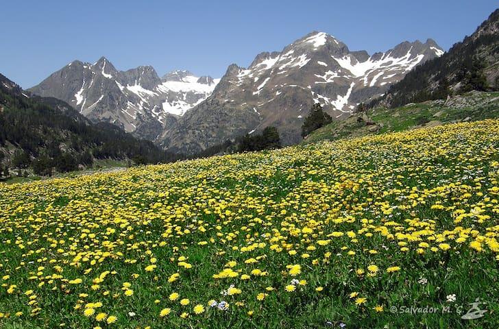La Primavera en el Pirineo. Empieza el deshielo y arranca la temporada de Descenso de Barrancos. Las praderas se llenan de flores!