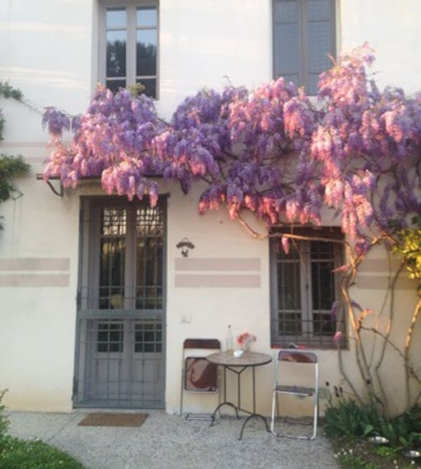 I fiori che danno il nome alla casa