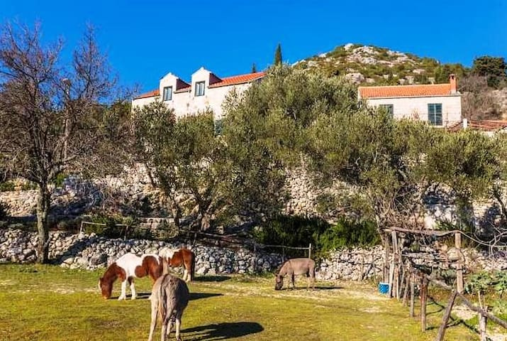 House in Nature & Organic food & Little Ranch - Dubrovnik - Casa