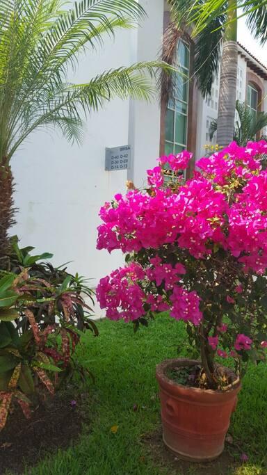 Jardines bien arreglados / Beautiful gardens.