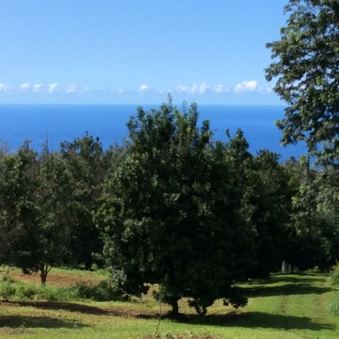 view from lanai of the cabin of ocean and macnut field