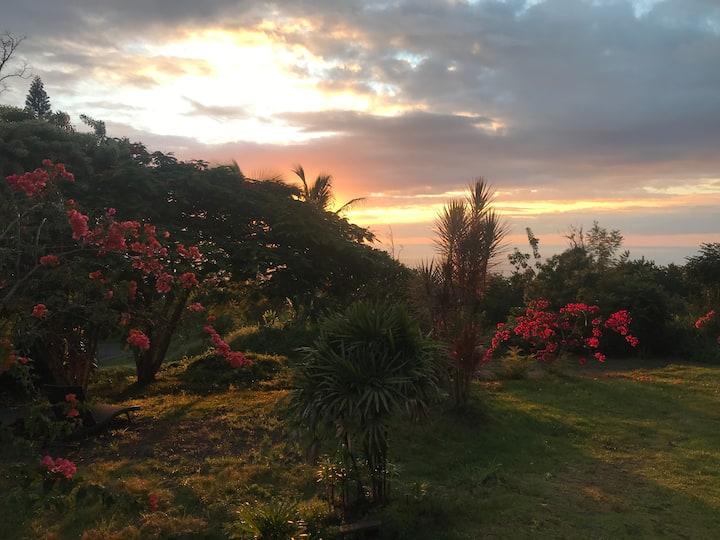 Experience Hawaii - Free SCUBA tours!