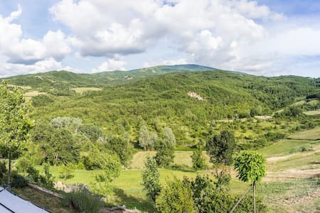 Nido d'amore nel verde  Love nest in the woods