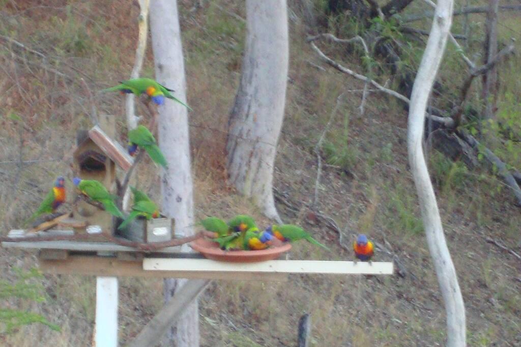 Birds feeding beside our house