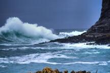 Curio Bay, Pre-Jurassic
