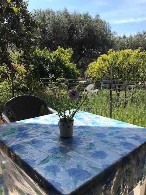 Il Giardino di Casa Maria- Ciclamino(M.diCamerota)