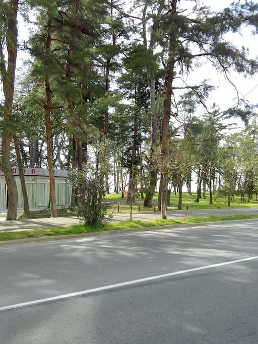 Зелённый парк/Green park