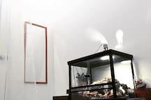 Penny's room (Gecko)