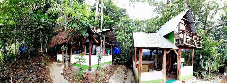 Habitación con vista y desayuno · Jungle Roots