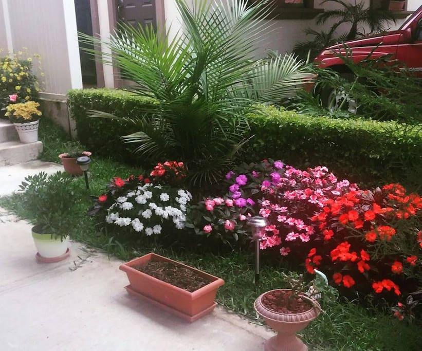 Mi jardin / My garden