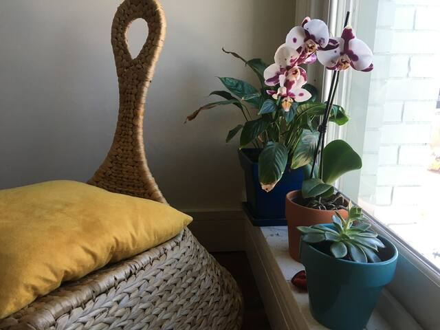 Creative Sanctuary in Downtown Durham - Durham - Apartamento
