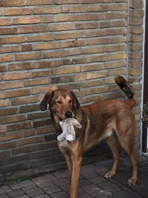 Der Hund des Hauses, Balou