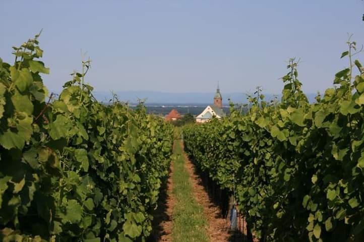 Alsace ; location longue durée 1 pers