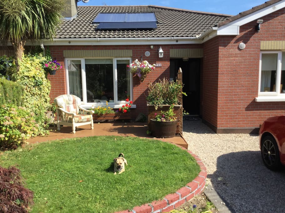 My home featuring our friendly and loyal little dog Dumpy!