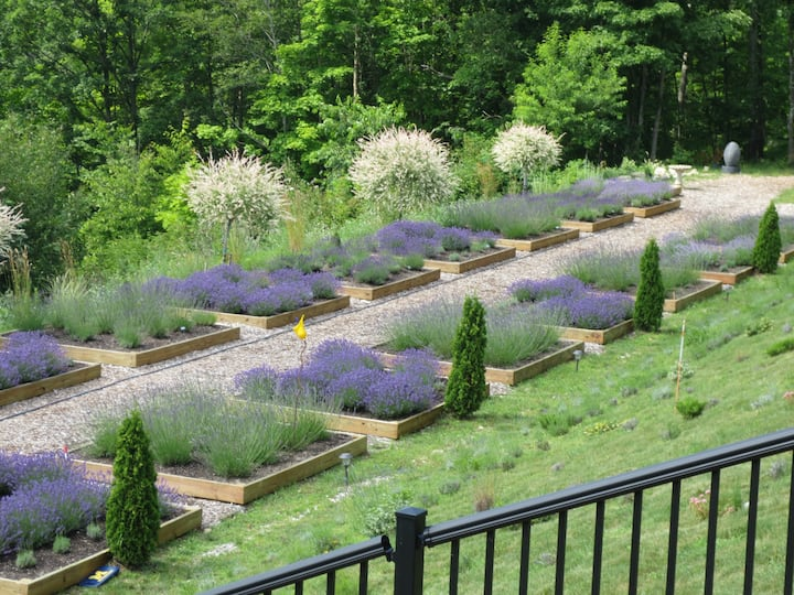 TerLa immerses guests in a working lavender farm.