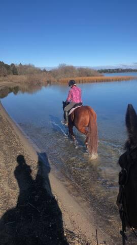 Hawk Ridge farm stay - equestrian friendly