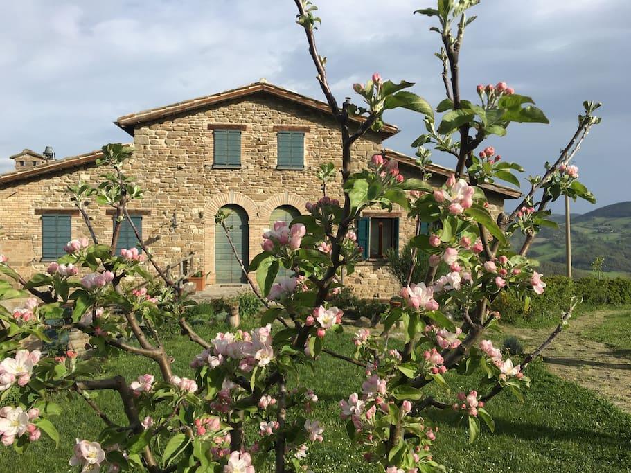 La facciata della casa in primavera