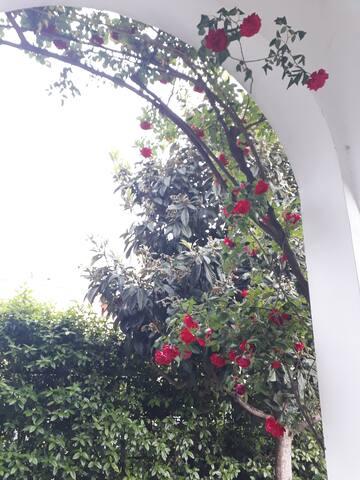 Patio in giardino