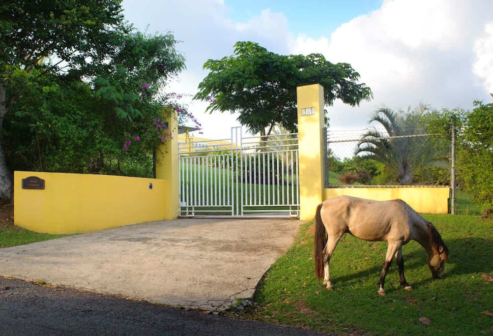 Electric gate access from paved road