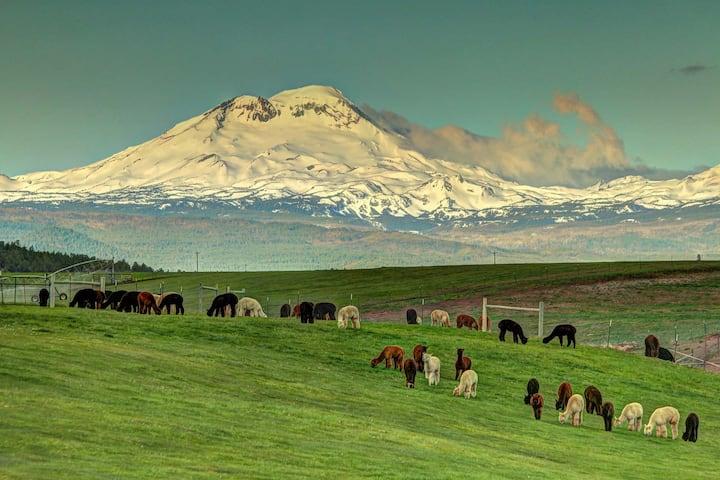 Alpaca Country Estates- Charming Master Bedroom