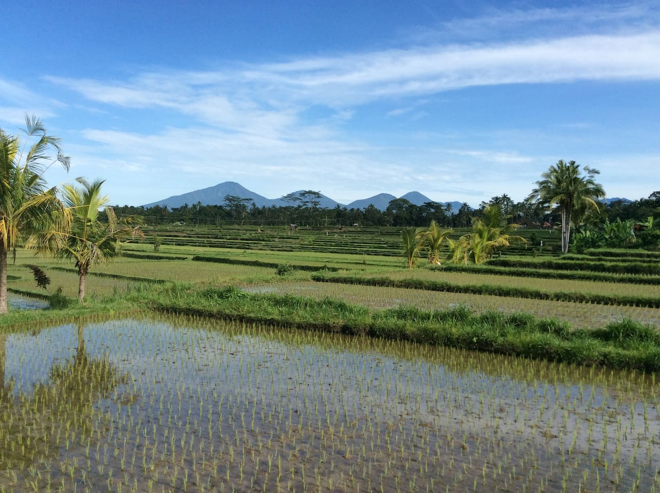 this is rice field view from private pool