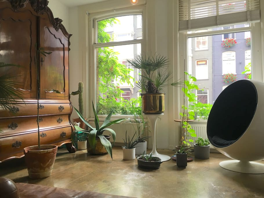 Living room with large windows and lots of plants