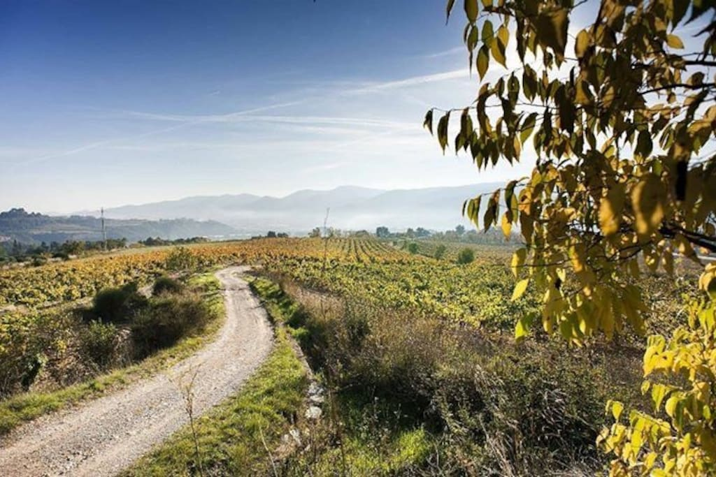 Get lost walking or running on our vineyard, which our family has been taking care since the 1600s.