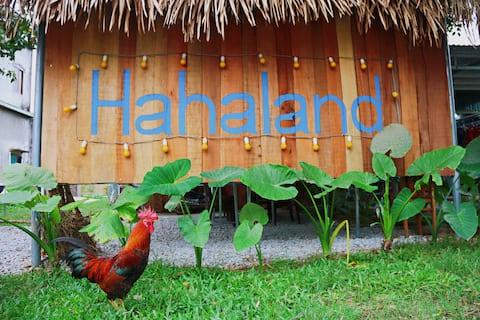Hahaland 4 Bed shared (1)