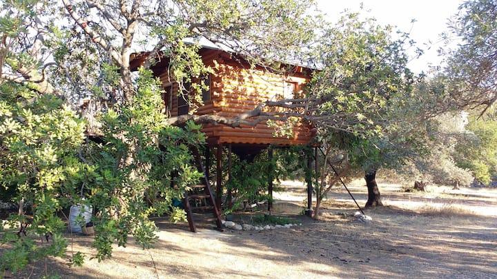 Kapiyani Tree House