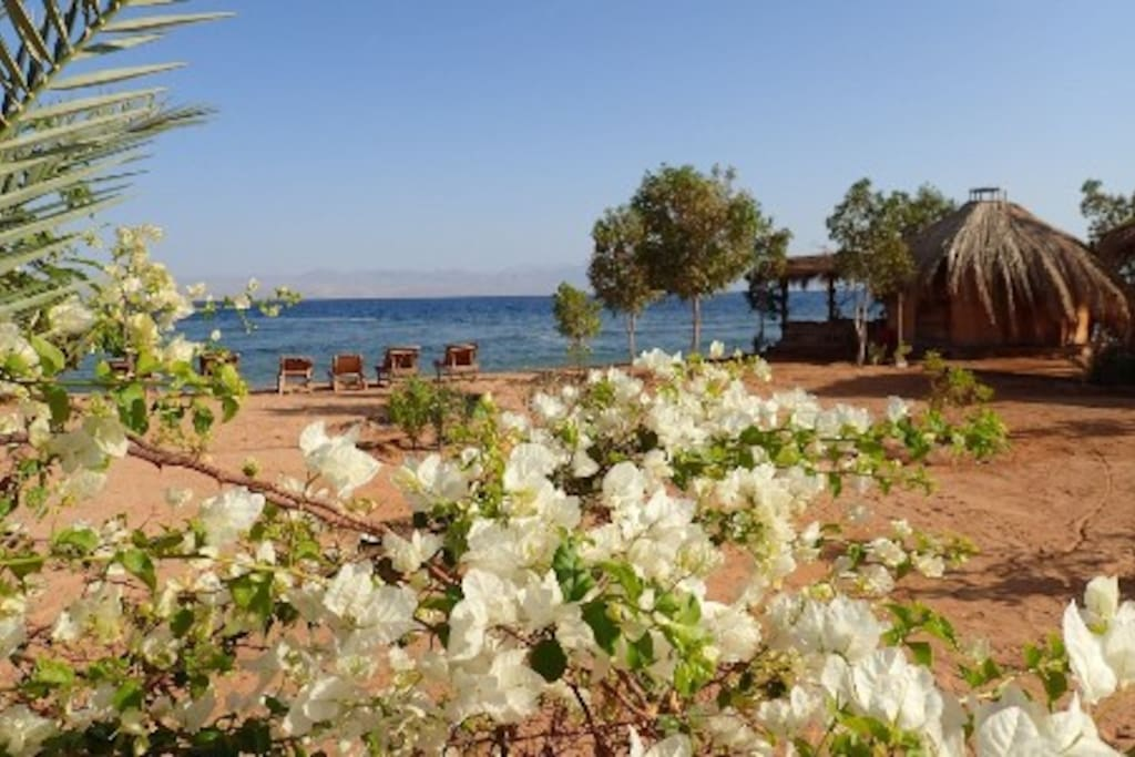 Bungalow at the beach surrounded by flowers