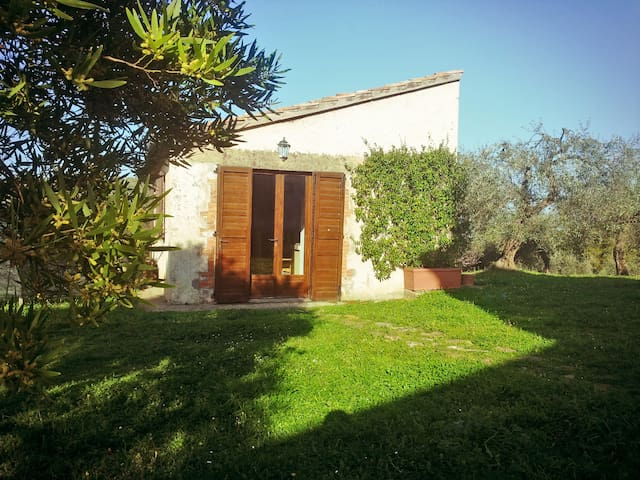 Scenic cottage among olive groves - Capalbio - House