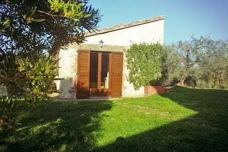 Scenic cottage among olive groves