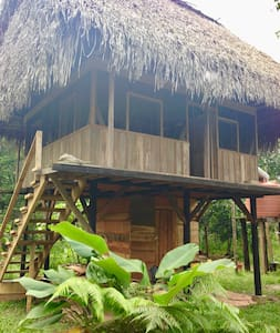 Off-grid thatched roof cabana with view of jungle