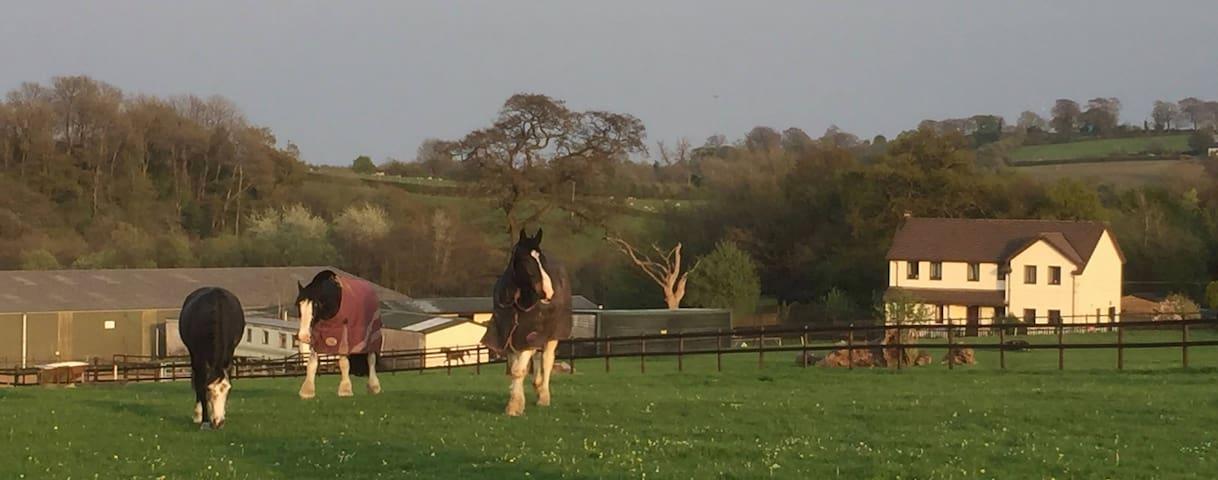 Talygarn Equestrian Centre