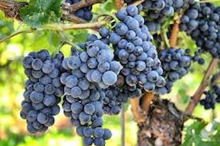 Traditional Finca between wonderful vineyards - Chimiche - 宾馆