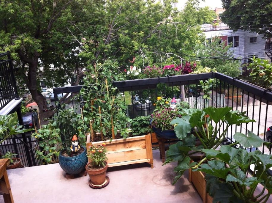 Back patio. Hostess with a green thumb!