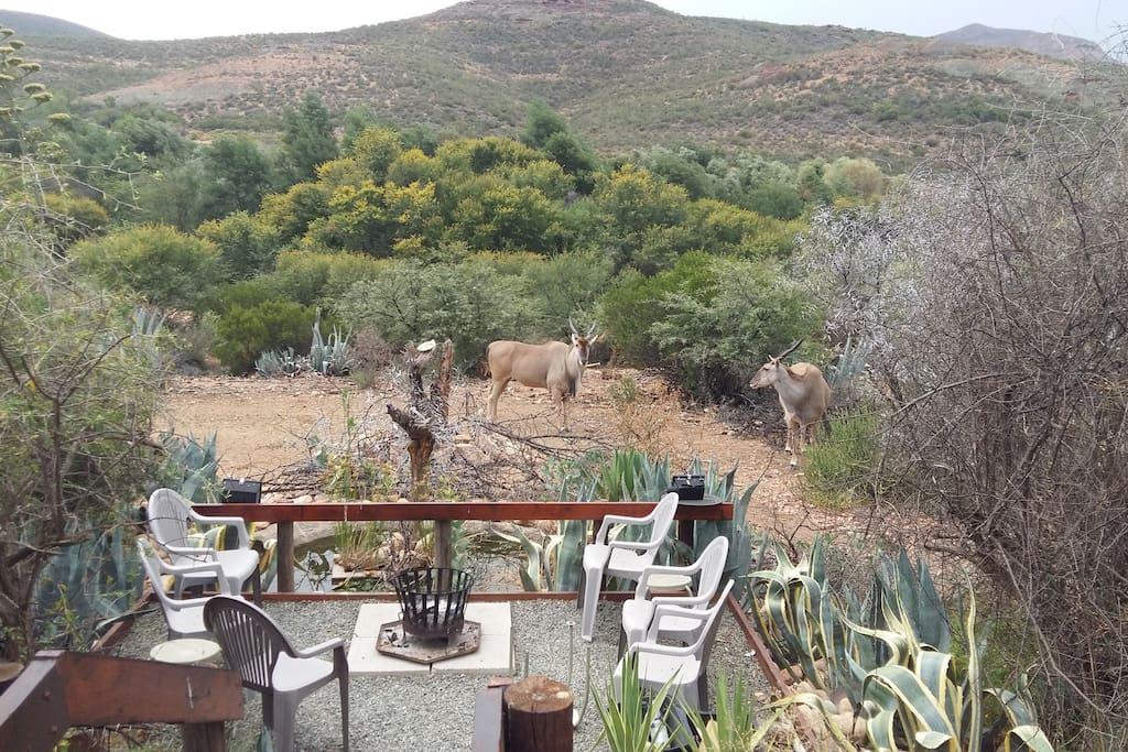 Eland coming for water at the Breakfast Deck