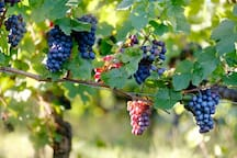 """We think Napa Valley is """"grape""""!"""