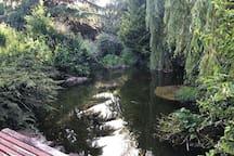 petit étang, prendre son café, que bord de l'eau avec le chant des oiseaux