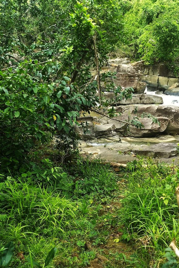 Rocks and Rainforest