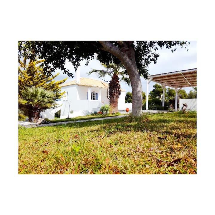Olive Grove Soulis Family Estate