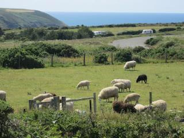 Lousarie Cottage (near St Agnes and Perranporth) - Saint Agnes - Apartment