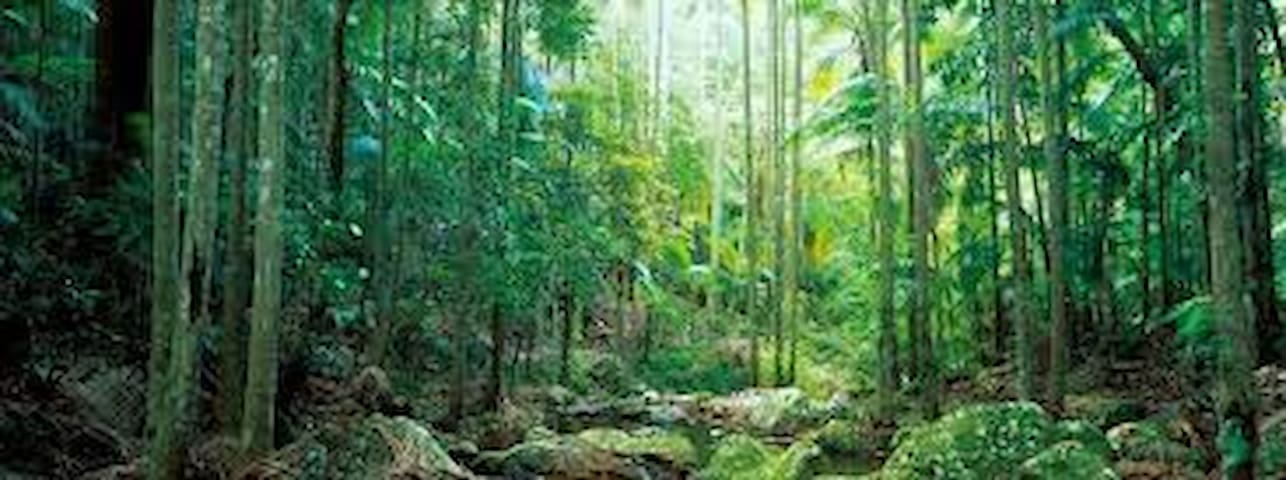 Beautiful Queenslander in the rainforest - Eagle Heights - Bed & Breakfast