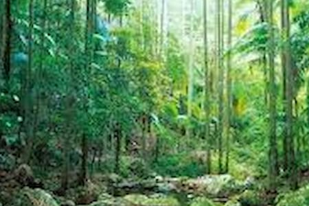 Beautiful Queenslander in the rainforest - Eagle Heights